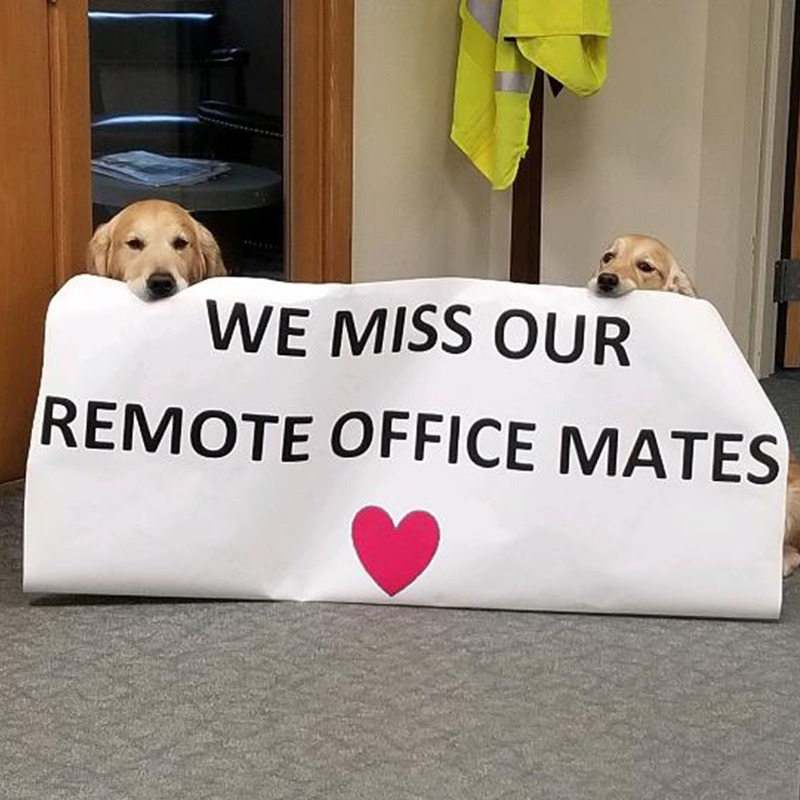"2 dogs holding up a sign that says ""we miss our remote office mates"""
